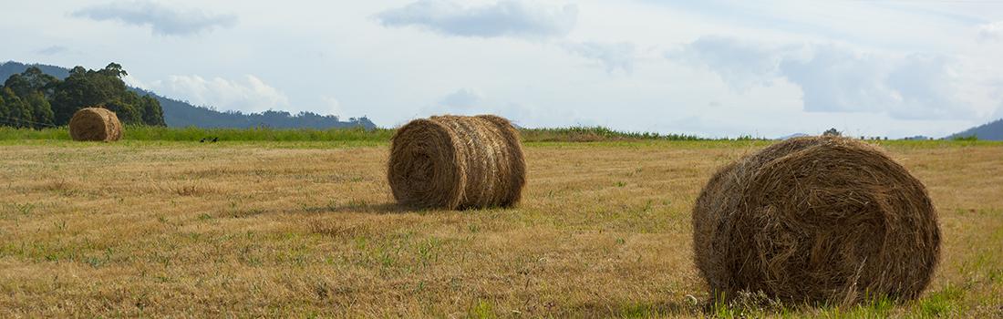 Seguros agropecuarios. Lugo. Seguros Nubeiro para explotaciones agrícolas.